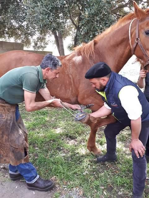 """L'Associazione Ippica Ghilarzese protagonista dell'evento """"Muristenes in Beranu"""""""